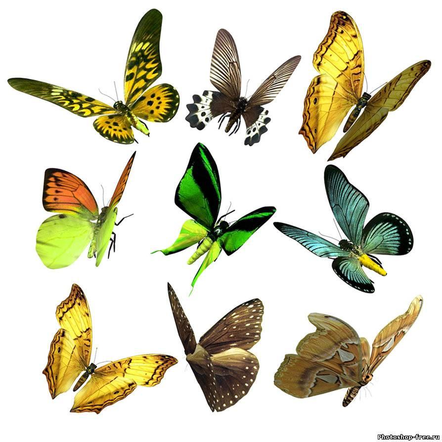 клипарт бабочки скачать: